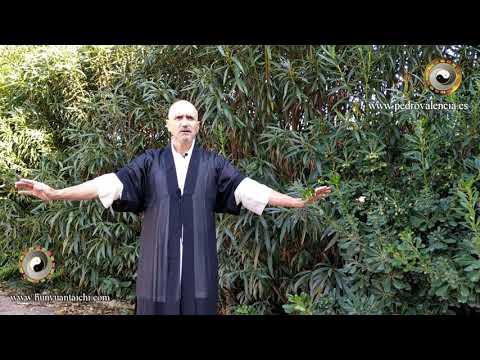 Práctica para otoño: video 2 pulmón