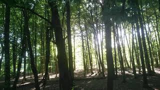 Лесной свет