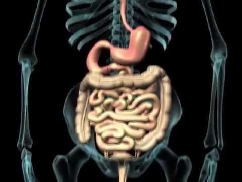Emorroidi sanguinanti nutrendosi