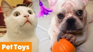 Pets Playing With Toys | Funny Pet Videos