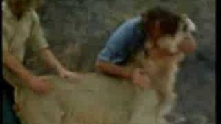 Lion reunited w/owners- I will always love you