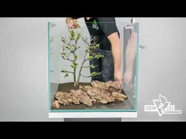 Aram Schneider Timelapse Bonsai Scape Aquascaping