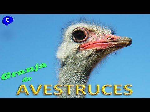 Granja de avestruces El Rincon de Requena