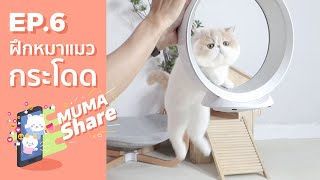 MUMA Share EP 6 : ฝึกหมาแมวกระโดดข้ามสิ่งกีดขวาง 🐶🐱
