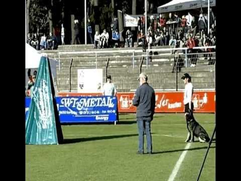 Preview video Ginoginelli von Kathago BSP 2011 Abt. C