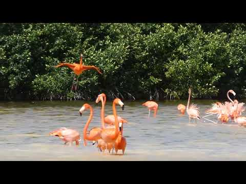 Pink Flamings of Celestún, Mexico