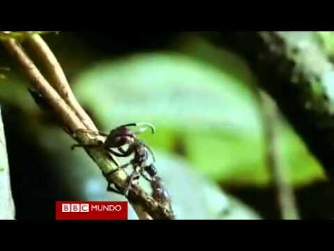 Kung saan live na parasites sa pantao sintomas katawan