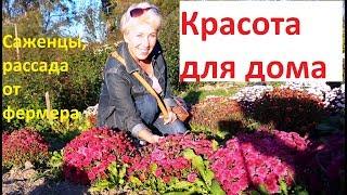 Цветы и виноград для дома. Фермерский питомник под Анапой