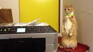 Смотреть онлайн Подборка: Коты изучают современную технику