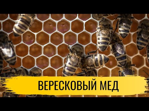Мед. Вересковый мед