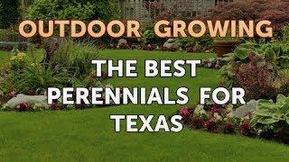The Best Perennials for Texas