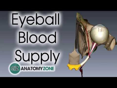 Unaczynienie gałki ocznej