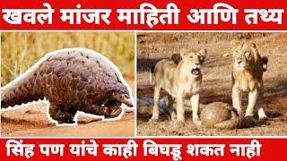 खवले मांजर माहिती आणि तथ्य   Pangolin facts in Marathi