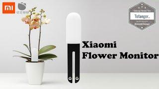 Xiaomi Mi Flora Monitor / Flower Smart Plant Monitor / Xiaomi Mi Plant Flowers