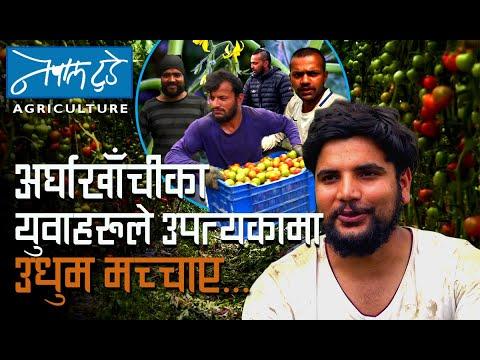 अर्घाखाँचीका युवाहरुले उपत्यकामा उधुम मच्चाए...[ The Nepal today ] Agriculture in Nepal.