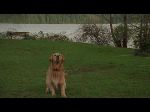 Air Bud: Golden Receiver Mp3