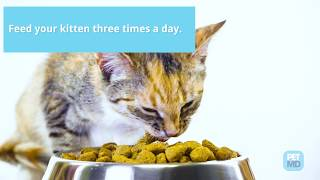 6 Tips for Feeding Kittens