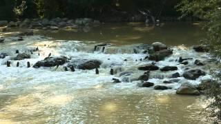 preview picture of video 'Camminando lungo il Tevere tra Ponte S.Giovanni e Ponte Valleceppi - 24 set 2010 - slideshow'