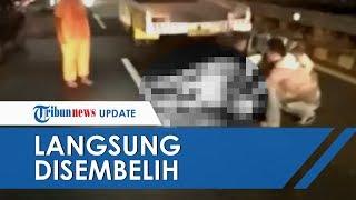 Seekor Sapi Kurban Tertabrak Taksi di Ruas Tol Dalam Kota Semanggi, Sempat Kabur saat Diikat