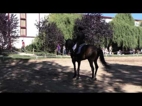Campeonato Navarro de Doma 2015 Añézcar 7