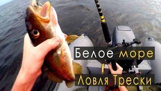 Ловля трески в Белом Море | 1-ая поездка | IRL