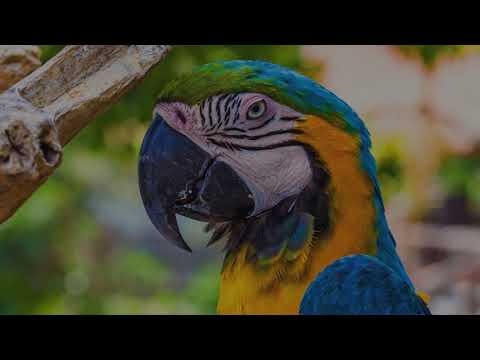 What Makes A Parrot The Most Popular Pet Bird?