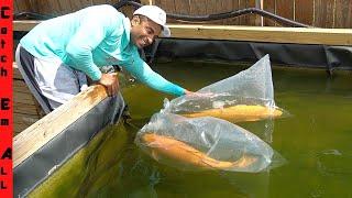 BUYING GIANT Rare PET FISH ONLINE!