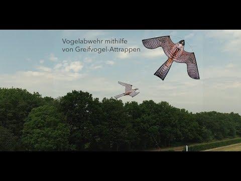 Vogelscheuchen Drachen - Greifvogel Attrappe zur effektiven Vogelabwehr