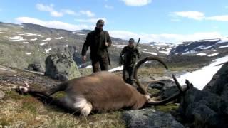 Hunt & Cook: Rudolf the Reindeer