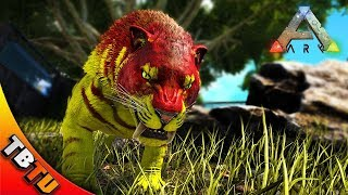 Beautiful Ark: Survivel Evolved Mutation Zoo E44   SABERTOOTH BREEDING AND MUTATIONS!  SABERTOOH ZOO ENCLOSURE