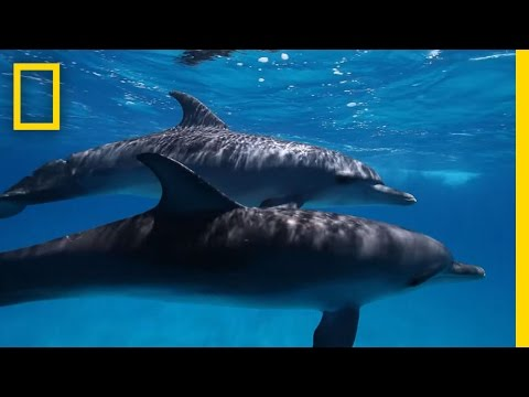 Dolphin Ecards Dive into the science of dolphin cognition with..