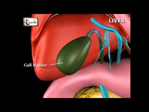 Лечение воспаления печени и поджелудочной железы