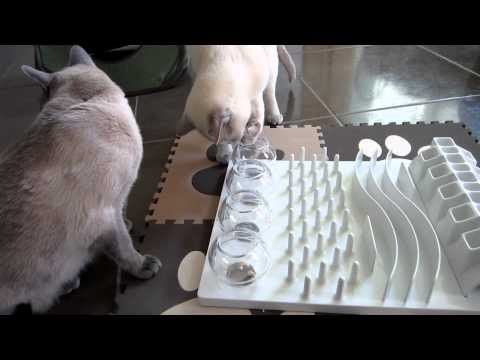 Tonkinese & Cat Activity Fun Board Food & Treat Puzzle [HD]