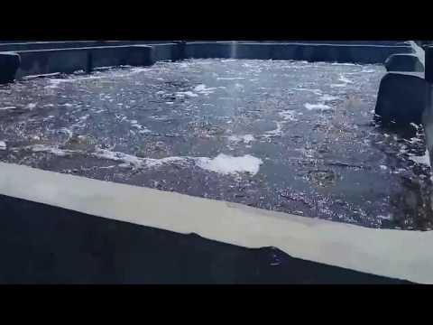 Video Budidaya udang vanamme kolam beton di Bireuen