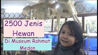 JALAN JALAN  KE RAHMAT INTERNATIONAL WILDLIFE MUSEUM AND GALLERY