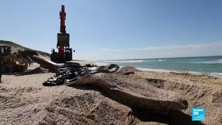 Wyciek oleju, Izrael: mocno dotknięta linia brzegowa.