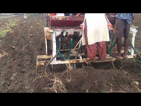 Jyostna planting seeds
