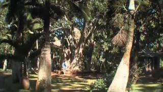 preview picture of video 'Pamplemousse Botanical Gardens Mauritius'