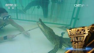 [挑战不可能(第一季)] 鳄鱼救助者杰伊·杨挑战徒手捕捉1.7米长的鳄鱼