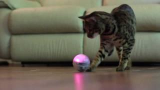 Sphero Robotic Ball: игрушка для домашнего питомца