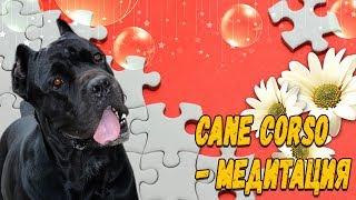 Медитация с собакой Кане Корсо на пазлах мозаике.#canecorso