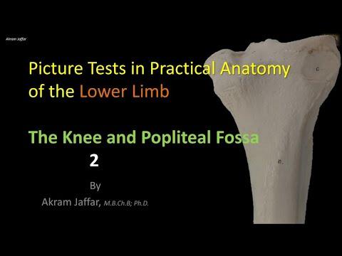 Test obrazkowy z anatomii kończyny dolnej - kolano i dół podkolanowy cz. 2