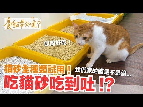 貓砂全種類試用測評