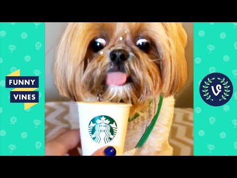 TRY NOT to LAUGH or GRIN: Funny Animals Vines Compilation 2017   Funny Vines Videos