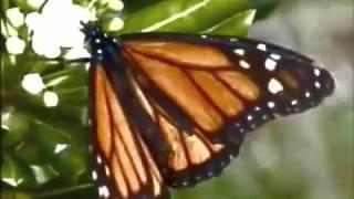 Apoptygma Berzerk - Butterfly Defect