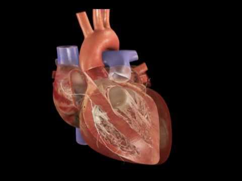 Doença cardíaca coronária e hipertensão tratamento