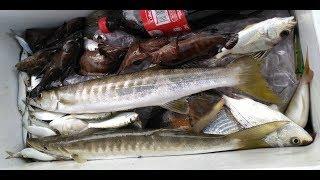 Pancingan dasar ringan alu-alu, gerut-gerut, tamban Port Dickson Malaysia  (light bottom fishing)