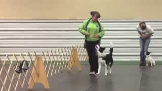 8 Month Old Puppy Training: Obedience Class Can Be Fun!