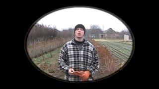 Бизнес на Чесноке (первый опыт)