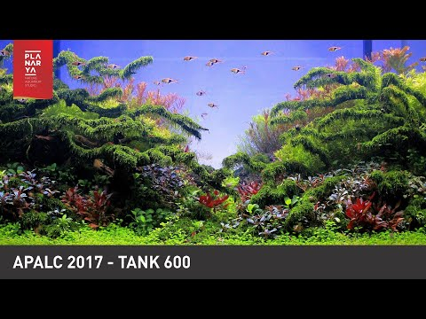 AQUASCAPE CONTEST - APALC 2017 TANK 600